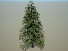 松树 植物 3d模型