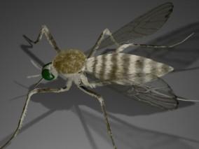 蚊子 昆虫 3d模型