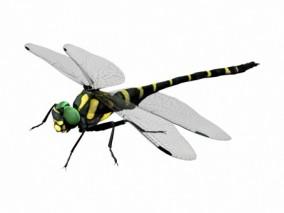 蜻蜓 3d模型