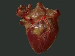 ue4 超写实人体器官CG模型