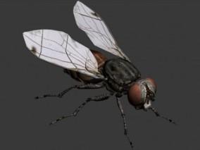 苍蝇 3d模型