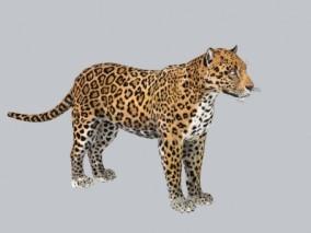 豹子 3d模型