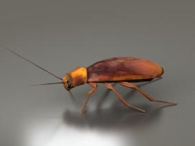 蟑螂 蜚蠊目 昆虫 节肢动物门 昆虫纲 医学昆虫 3d模型