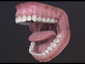牙 口腔牙科假牙CG模型