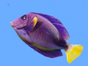 热带鱼3D模型 3d模型