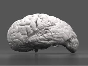 左侧大脑半球大脑 人脑 医疗解剖模型