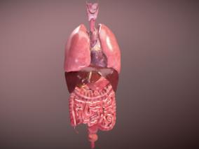 消化系统 胃 肠道