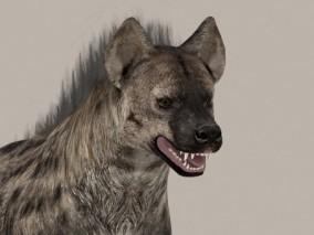 鬣狗3D模型