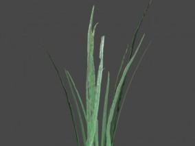 茅草 狗尾巴草 花草野草 草丛 花草植物 绿草 杂草 枯草 3d模型