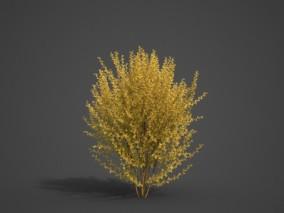藤类植物 灌木 植物 金钟花 矮小植物 写实灌木 景观灌木 矮灌木丛 野草3d模型