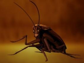 蟑螂 昆虫  虫子