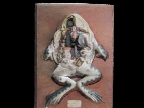 石膏解剖学 青蛙内脏器官 蛙解剖 蛙内部解剖学研究 3d模型