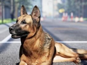 狗 黑背 德国牧羊犬 德牧 看门狗 中华田园犬 宠物 警犬 写实狗 绑定狗 UE4 3d模型