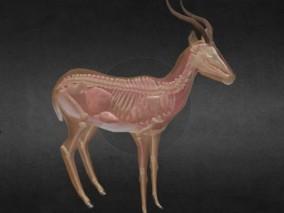 山羊 小绵羊 羊群 放牧羊 羊羔 小白羊 牧羊 家禽 动物 骨架 肌肉 动物肌肉 3d模型