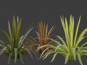 花草 盆栽 蕨类 大叶植物 芭蕉 热带植物 小植物 花草小植物 植物车前草