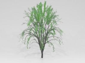 植被树木 杨柳 柳树 倒垂杨柳 河边柳树 垂柳 绿化树 景观树 园林 3d模型
