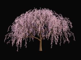 樱桃树 樱花树 花树 樱桃花 果树 风吹花树 樱花树 樱花 春节桃树 树木 粉色花树木 植物