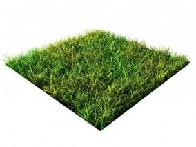 草地 草丛 草皮 3d模型
