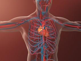 医学动画,人体心脏,人体血管系统,血液循环,动脉,静脉,血液交换,心脏内部结构,心脏跳动,血栓