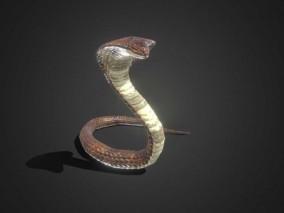 【带动画】蛇 眼镜蛇 鳞 毒蛇 响尾蛇 蝮蛇 冷血动物 CG蛇 眼镜王蛇