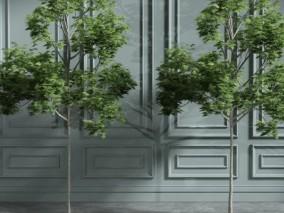 树木 盆栽 植物 3d模型
