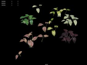 植物   灌木丛