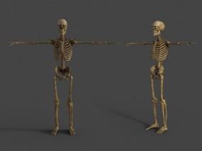 人体骨骼架 骷髅鬼 写实骨头模型