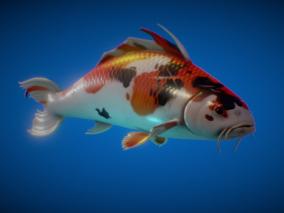 【带动画】金鱼 锦鲤 鱼 观赏鱼 昭和 鲤鱼 鱼类 锦鱼 动物 淡水鱼 河鱼