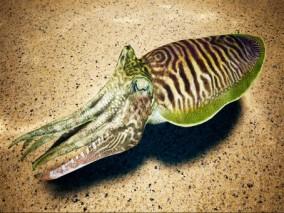 ue4 大章鱼 乌贼 深海生物 带绑定 带动画 虚幻4 3d模型