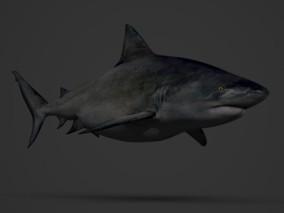 海洋动物 胖鲨鱼 3d模型