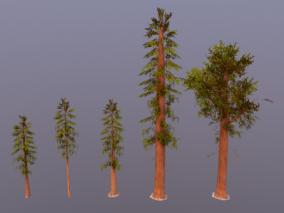高精贴图 次世代 写实 大树 杉木 巨型红杉树 杉科 杉树林 植物 3d模型