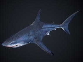 PBR 鲨鱼 海洋生物 姥鲨 大白鲨 虎头鲨 鱼类 3d模型