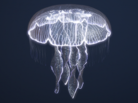 PBR 海洋生物 水母 水生动物 浮游生物 刺丝胞动物 钵水母纲 十字水母纲 立方水母纲动物