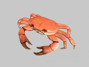 【动画】螃蟹 甲壳类动物 梭子蟹 青蟹 中华绒螯蟹 河蟹 毛蟹 清水蟹