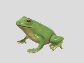 【动画】青蛙 树蛙 蛤蟆 两栖动物 蛙类 绿皮蛙
