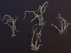 高精度 枯树 树桩 枯树 鬼树 树枝 树干 古树 老树 干枯树木