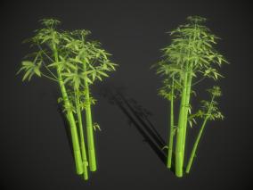 次世代 Q版 可爱 竹子 散尾竹 龟背竹 竹竿 竹林 植物 老竹子