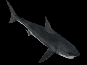 巨齿鲨 大白鲨 鲨鱼 怪物 鱼类 海洋生物 坐骑 写实 3d模型