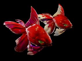 次世代 金鱼 红色金鱼 鱼 3d模型