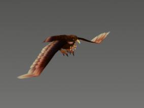老鹰 鵰 鹰