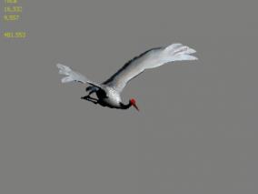 仙鹤 鸟 鹤