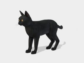 写实猫 黑猫 猫咪 孟买猫 动物 猫科动物 家猫 宠物猫 cat