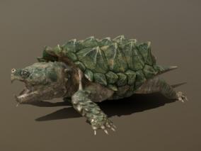 鳄龟  乌龟  动物