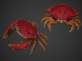 PBR 次世代 螃蟹 大闸蟹 蟹 河蟹