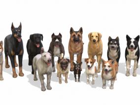 宠物狗合集  家养狗  犬  多种样式狗狗 3d模型