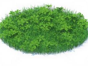 草坪 草皮 草地 绿化 草皮植物 草地 狗尾草 小草 野草 花草 小花 野花 (3) 3d模型