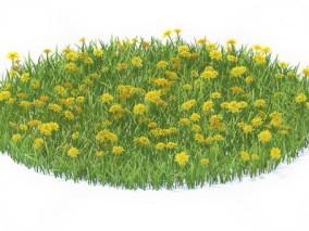 草坪 草皮 草地 绿化 草皮植物 草地 狗尾草 小草 野草 花草 小花 野花 (2) 3d模型