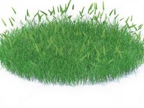 草坪 草皮 草地 绿化 草皮植物 草地 狗尾草 小草 野草 花草 小花 野花