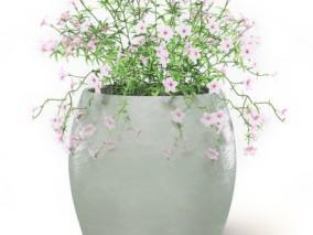 绿植 盆栽 植物 盆栽花卉 植物 盆栽小树 绿化 配景 月季花  (3) 3d模型