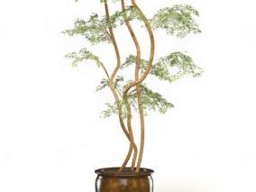 绿植 盆栽 植物 盆栽花卉 植物 盆栽小树 绿化 配景 月季花  (2) 3d模型